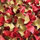 DECOFILL dekorative Papier-Verpackungschips Polsterchips, rot, 120 Liter